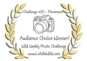 Audience Choice Award - Challenge #30
