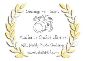 Audience Choice Award - Challenge #31