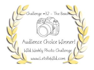 Audience Choice Award - Challenge #32