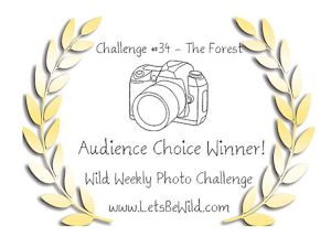 Audience Choice Award - Challenge #34