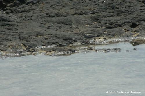 Find the sandpiper!