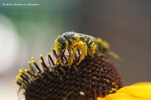 Grains of pollen