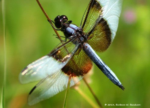 One lovely dragonfly!