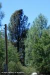 Half of this tree isburnt