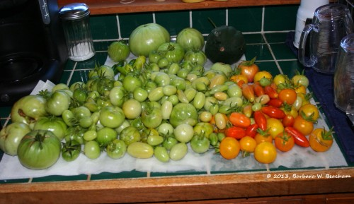 Last year's tomatoes first shot