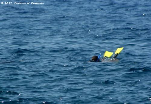 A snorkeler in the ocean