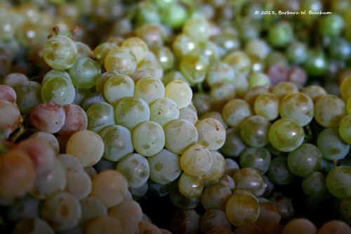 The grapes up close