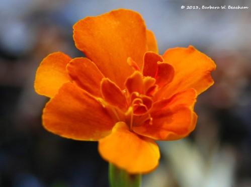 A splash of orange