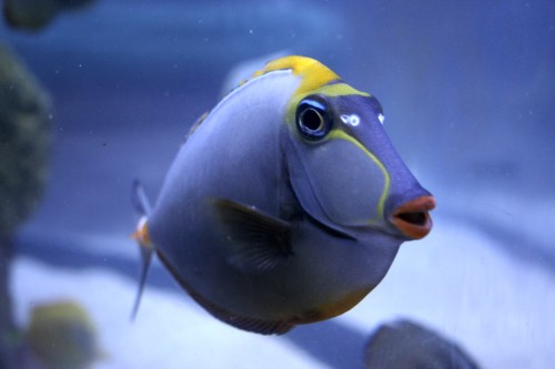My name is Dory