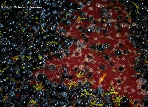 Primitivo ready to start fermentation