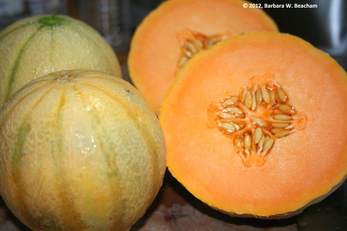 The beauty inside the Tuscan Melon
