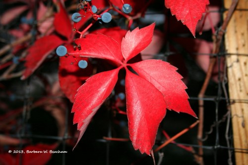A red star