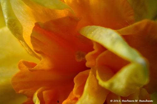 Orange ruffles