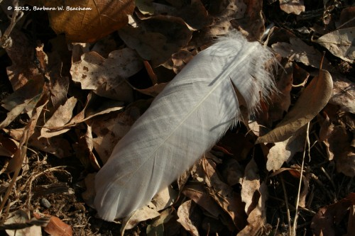 A dropped feather