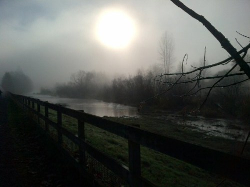 Into the Fog - Copyright Erin Leary