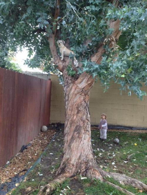 Up a Tree - Photo by Rochelle Wisoff-Fields