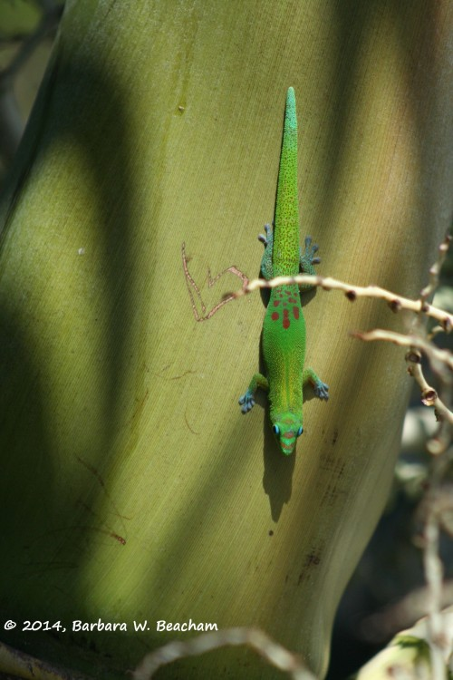 One colorful gecko