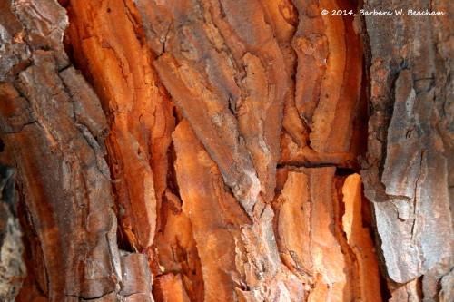 Grey pine bark