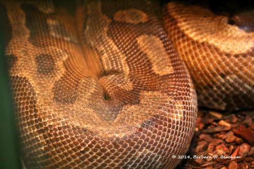 Amazing snake skin