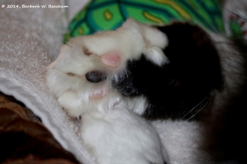 Pretty Feet of Our Cat Madison