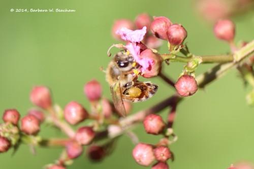 Pollen ball
