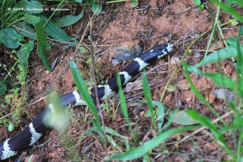 Pretty snake!