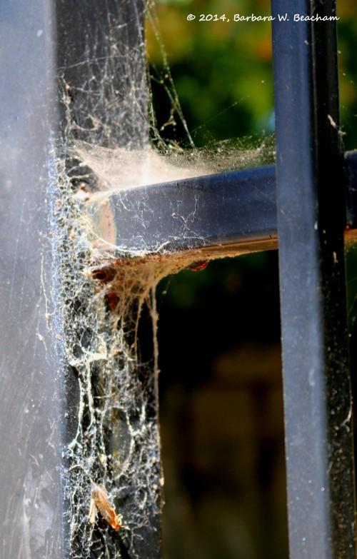 Webs on a gate