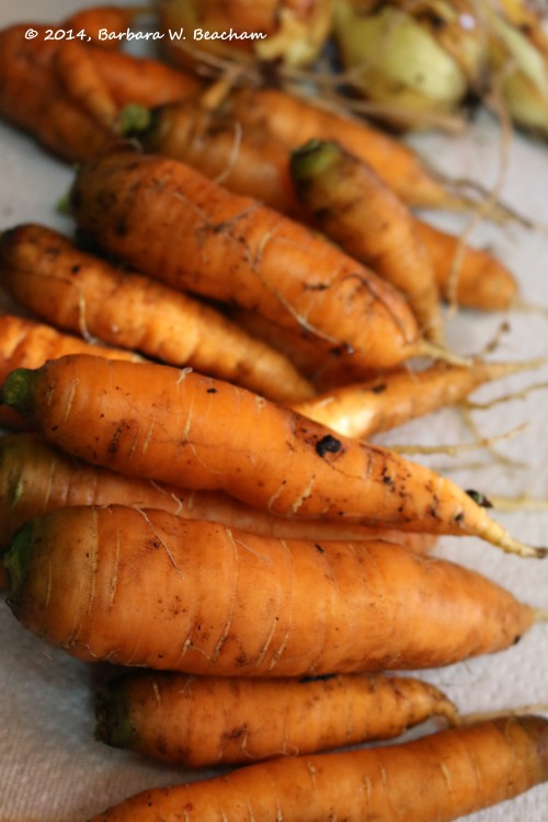 Carrots before a good scrub