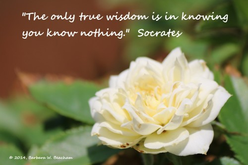 The wisdom of Socrates