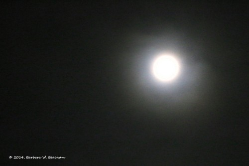 The moon in the fog