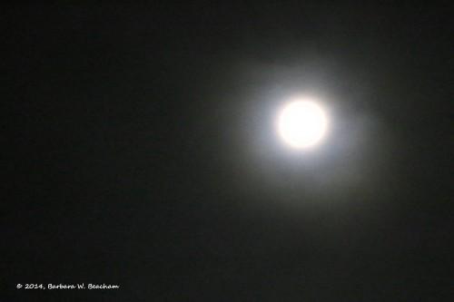 The moon in the fog