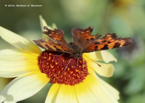 Feeding on nectar