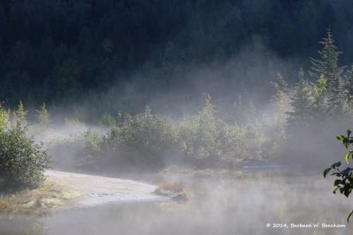 I wake up in a fog