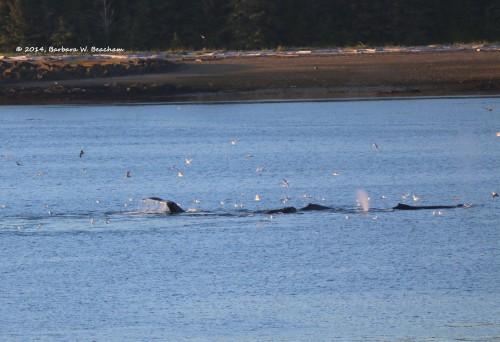 Four whale