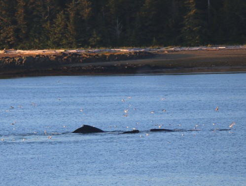 Three whale
