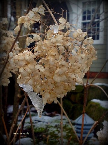 Frozen - Photo by Janet Webb