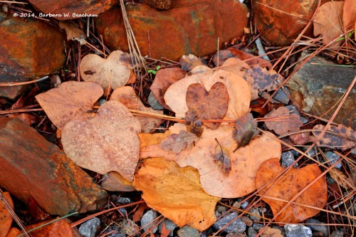 Hearts from the red bud tree