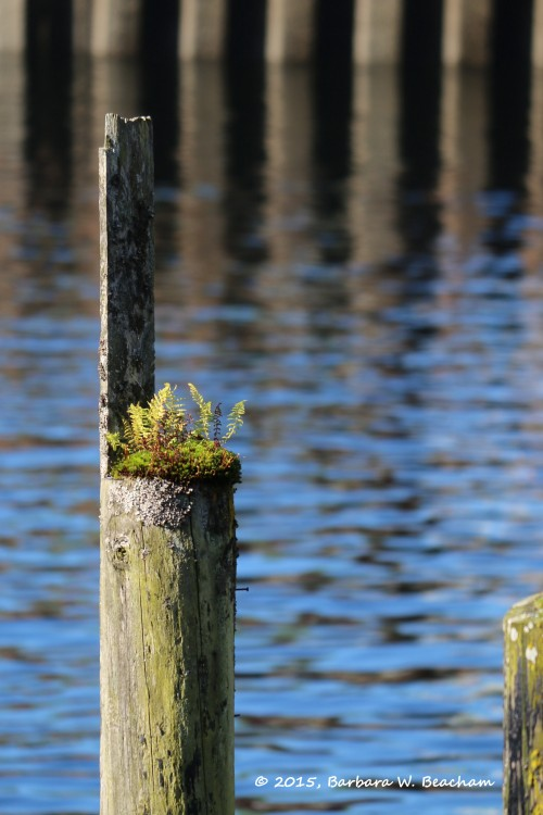 Moss and fern on a pier post
