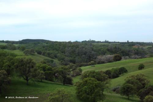 Rolling green hillsides