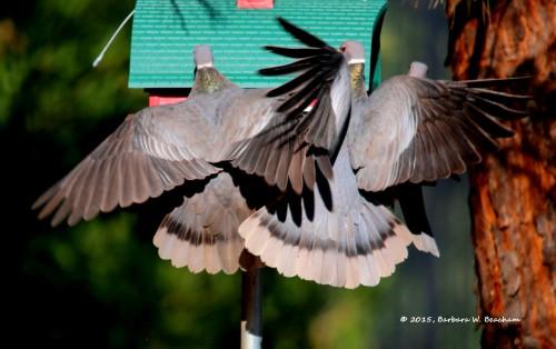 All a flutter!