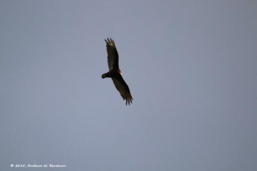 Wings fully spread