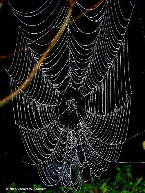 The Webs We Weave - Photo © 2015, Barbara W. Beacham