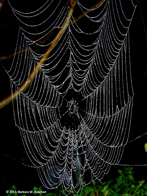 The Webs We Weave - Photo © 2015, Barbara W. Beacham